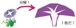 アサガオ 花のつくり