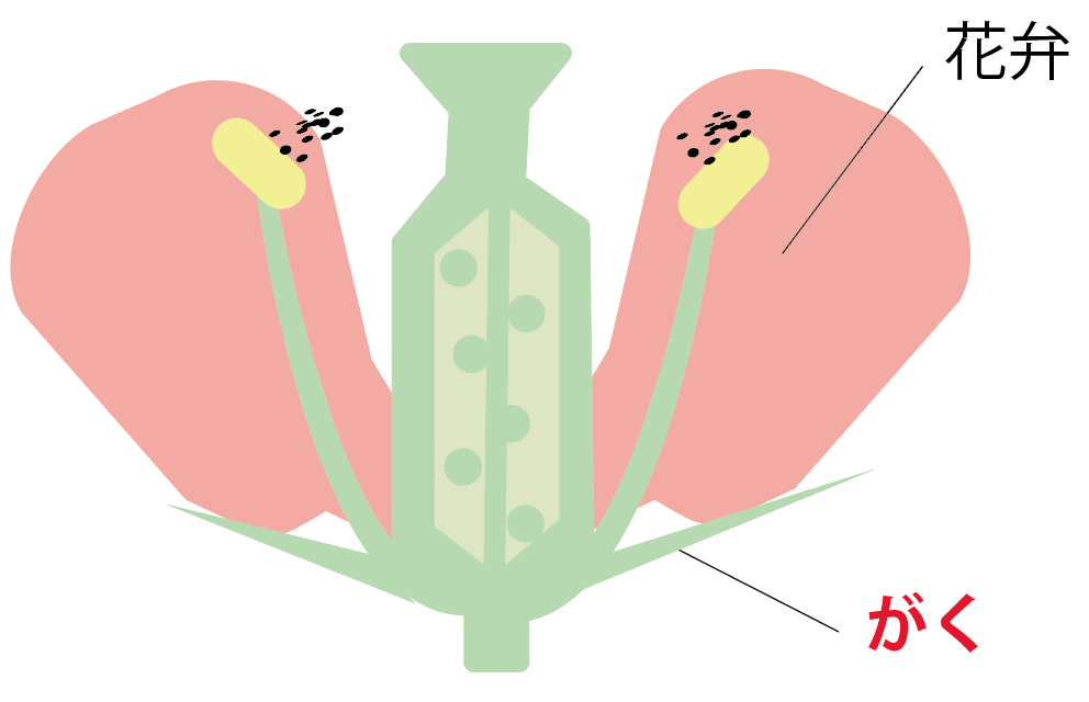 花のつくりとはたらき 図