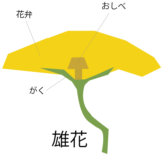 ヘチマの花のつくり