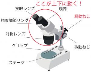 双眼実体顕微鏡 名称
