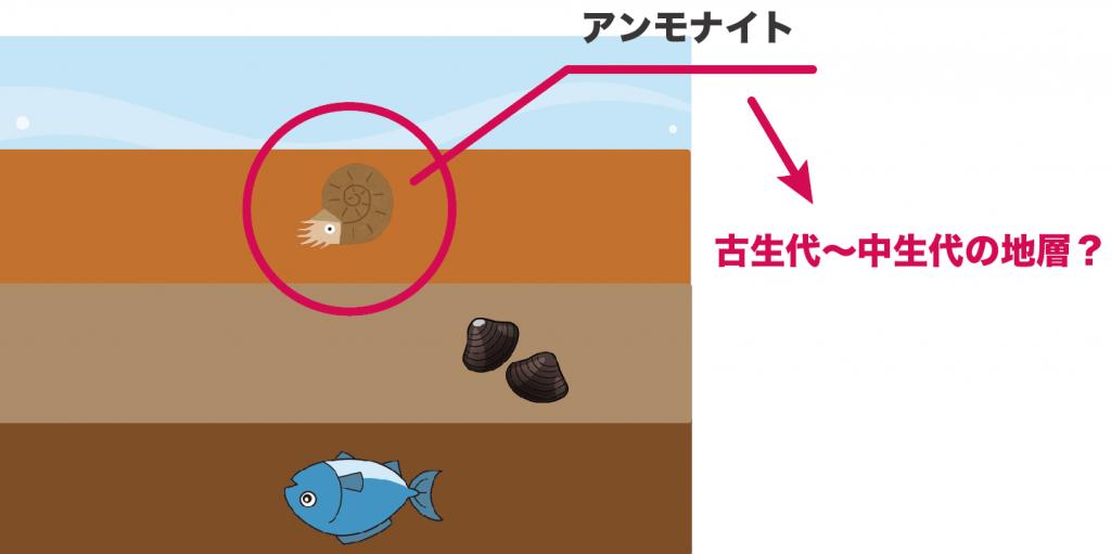 示相化石と示準化石の違い